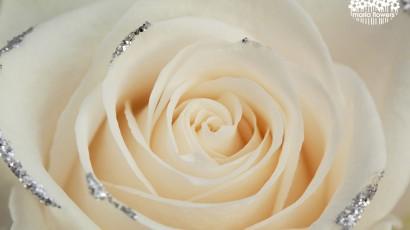 3425-Glitter Rose